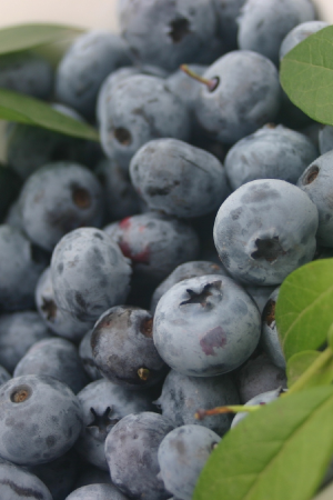 image fresh  North Carolina Blueberries